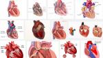 Cảnh báo sức khỏe cho bạn khi phát hiện những dấu hiệu bệnh van tim