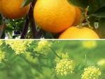 Bất ngờ 2 loại cây cỏ thân thuộc đạt giải Nobel Y học