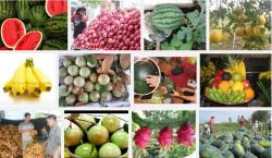 An tâm sử dụng 6 loại trái cây chỉ có ở Việt Nam mà không bao giờ nhập khẩu Trung Quốc