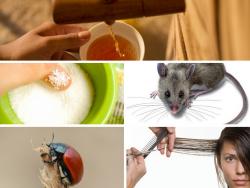 Kinh hãi với 5 thành phần độc hại trong thức ăn khoái khẩu thường ngày