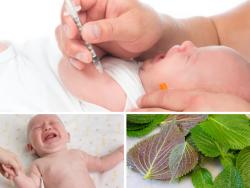 Cách hạ sốt cho trẻ sơ sinh khi tiêm phòng bằng lá tía tô