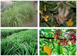 [ Video sức khỏe ] Trồng ngay những loại cây sau sẽ không lo bị côn trùng làm phiền