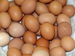 Có phải trong lòng đỏ trứng có nhiều cholesterol làm cao mỡ máu không? Trứng gà ta hay trứng gà công nghiệp bổ hơn? Nên ăn bao nhiêu quả trứng một tuần?