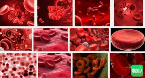 Nhóm máu ảnh hưởng rất lớn đến sức khỏe của bạn