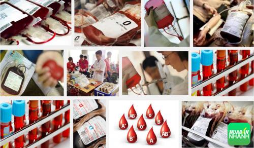 Nhóm máu AB - Những điều cần chú ý, 69, Phương Thảo, Cẩm Nang Sức Khỏe, 19/10/2016 15:50:49