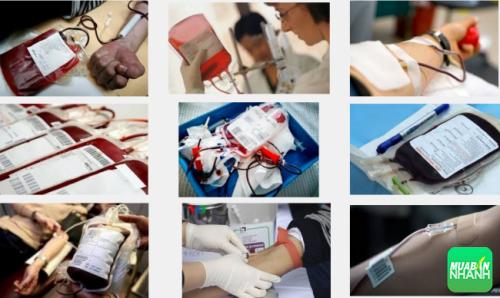 """Nhóm máu B được gọi là nhóm máu """"người du cư""""."""