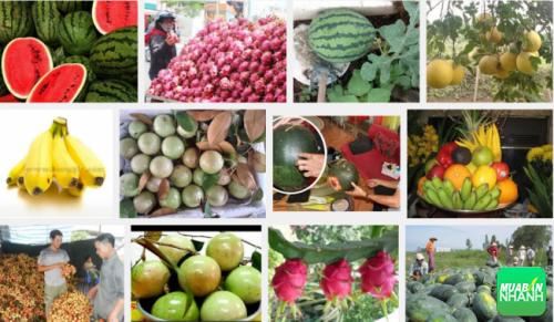 6 loại thực phẩm không bao giờ nhập khẩu