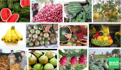 An tâm sử dụng 6 loại trái cây chỉ có ở Việt Nam mà không bao giờ nhập khẩu Trung Quốc, 87, Phương Thảo, Cẩm Nang Sức Khỏe, 17/04/2017 09:21:11