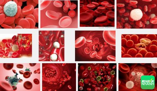 Đừng bỏ qua những dấu hiệu chứng tỏ bạn đang có nguy cơ mắc bệnh ung thư máu, 148, Phương Thảo, Cẩm Nang Sức Khỏe, 30/09/2016 15:08:01