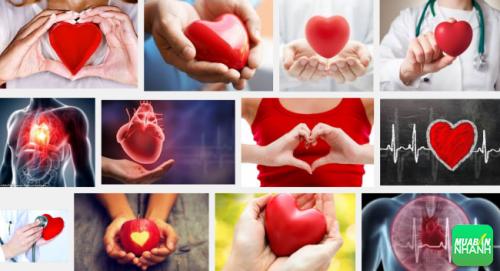Bệnh tim mạch là bệnh liên quan đến sự hoạt động quá sức của tim