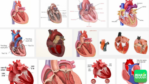 Bệnh van tim là bệnh hay gặp nhất trong các bệnh lý tim mạch