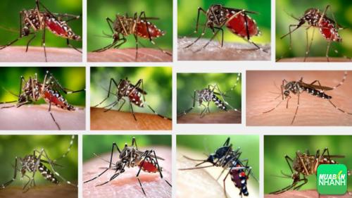 Muỗi vằn là nguyên nhân xảy ra sốt xuất huyết