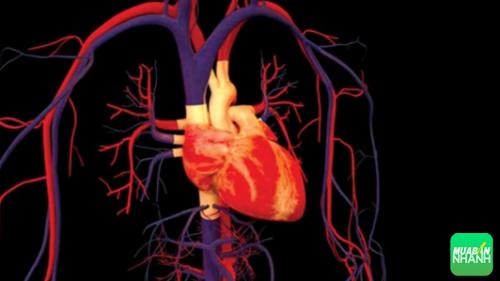 Cơ thể đang lên tiếng báo hiệu nguy cơ bệnh nhịp tim nhanh đang đến rất gần bạn, 236, Phương Thảo, Cẩm Nang Sức Khỏe, 12/10/2016 17:36:26