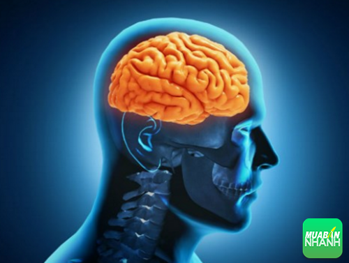 Cảnh báo bệnh phình động mạch não qua các biểu hiện khác thường của cơ thể, 242, Phương Thảo, Cẩm Nang Sức Khỏe, 13/10/2016 17:35:59
