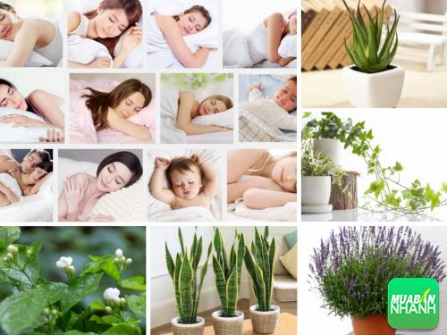 Mất ngủ - Chuyện nhỏ giờ đây đã có cách khắc phục tuyệt hay!, 244, Phương Thảo, Cẩm Nang Sức Khỏe, 14/10/2016 10:52:19