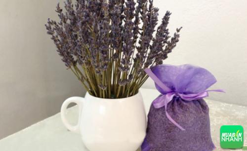 Mùi của oải hương đã được các chuyên gia chứng minh là tốt nhất cho giấc ngủ.