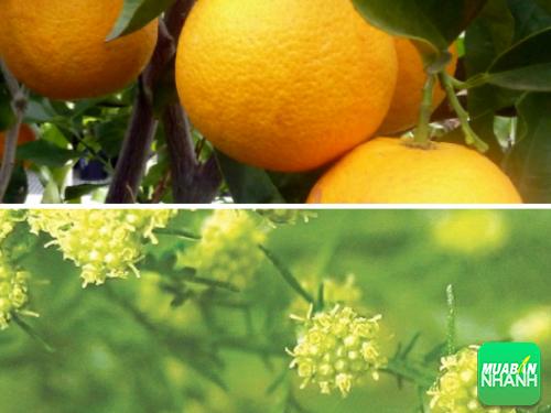 Bất ngờ 2 loại cây cỏ thân thuộc đạt giải Nobel Y học, 268, Phương Thảo, Cẩm Nang Sức Khỏe, 02/08/2017 17:57:05