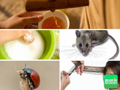 Kinh hãi với 5 thành phần độc hại trong thức ăn khoái khẩu thường ngày, 285, Phương Thảo, Cẩm Nang Sức Khỏe, 17/04/2017 09:07:37