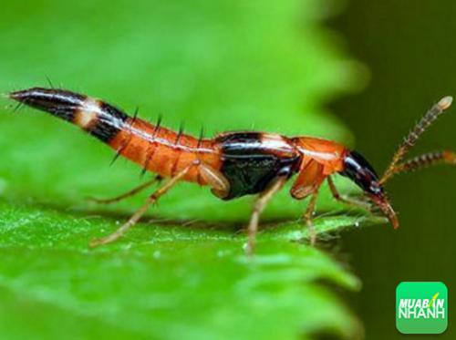 Báo động dịch kiến ba khoang đang vào mùa cao điểm, 292, Phương Thảo, Cẩm Nang Sức Khỏe, 17/04/2017 09:03:35