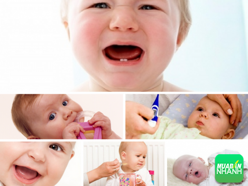 Dấu hiệu nhận biết sớm con mọc răng để bố mẹ chăm sóc tốt nhất, 310, Phương Thảo, Cẩm Nang Sức Khỏe, 26/10/2016 16:56:52