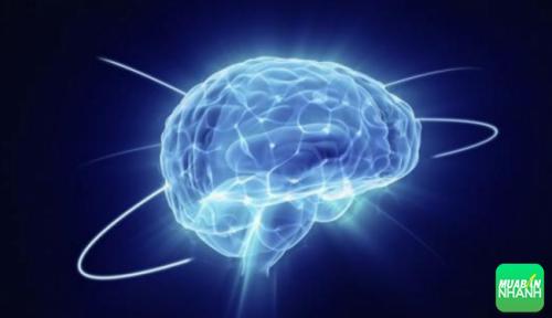 Trạng thái cảm xúc ảnh hưởng đến não bộ và sức khỏe của con người.