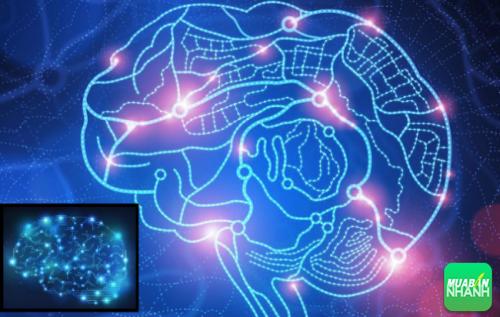 Hệ thống thần kinh suy nghĩ tích cực bài tiết ra có khả năng kích thích chức năng sinh trưởng và phát triển của tế bào.