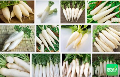 Mùa đông không tách rời củ cải