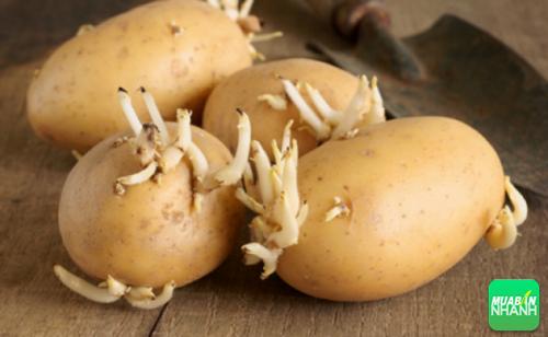khoai tây mọc mầm hoặc biến thành màu xanh
