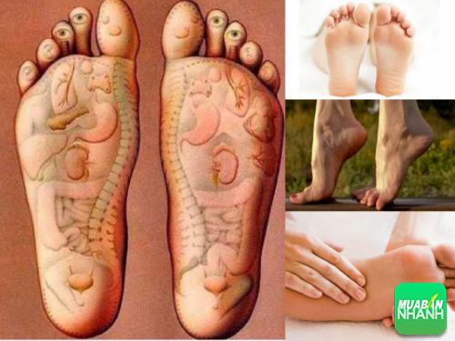 Bàn chân có các huyệt vị kết nối với các cơ quan nội tạng trong cơ thể con người.