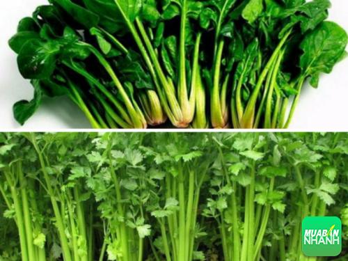 Rau bó xôi và cần tây có thể nói là hai loại thực phẩm vô cùng tốt cho sức khỏe con người.