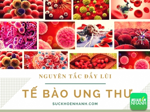 3 Nguyên tắc vàng giúp đẩy lùi tế bào ung thư tồn tại trong cơ thể bất cứ ai, 435, Phương Thảo, Cẩm Nang Sức Khỏe, 27/02/2017 09:21:51