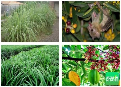 [ Video sức khỏe ] Trồng ngay những loại cây sau sẽ không lo bị côn trùng làm phiền, 502, Tố Uyên, Cẩm Nang Sức Khỏe, 03/08/2017 10:42:04