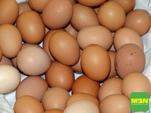 Có phải trong lòng đỏ trứng có nhiều cholesterol làm cao mỡ máu không? Trứng gà ta hay trứng gà công nghiệp bổ hơn? Nên ăn bao nhiêu quả trứng một tuần?, 565, Ngọc Diệp, Cẩm Nang Sức Khỏe, 24/10/2018 16:59:14