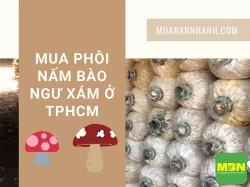 Sức khỏe nhanh chia sẽ địa chỉ mua phôi nấm bào ngư xám ở TPHCM, 590, Hải Lý, Cẩm Nang Sức Khỏe, 08/10/2021 12:37:46