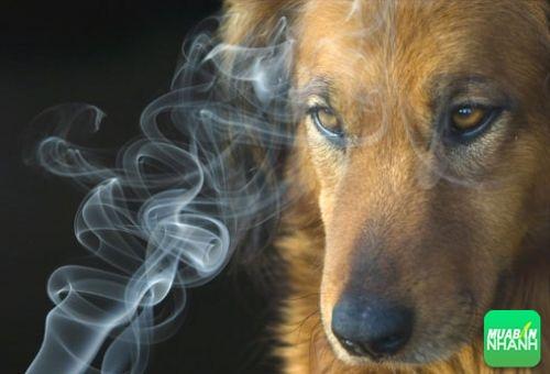 Chó có thể nhận biết người bị ung thư phổi, 551, Ngọc Diệp, Cẩm Nang Sức Khỏe, 09/02/2018 17:31:31